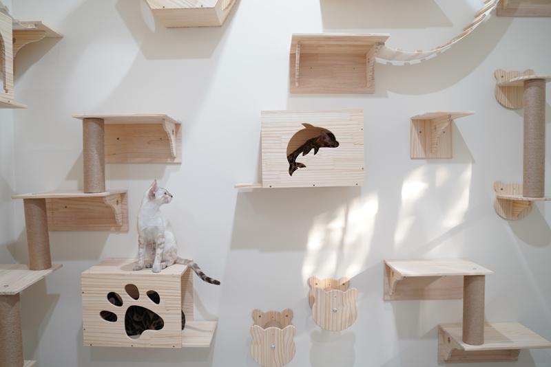 ตกแต่งภายในบ้าน เปลี่ยนกำแพงที่ว่างเป็นสนามแมวเล่น